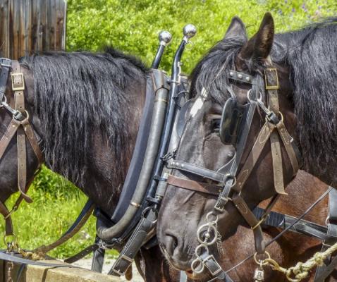 Pferdeanhänger Kaufen